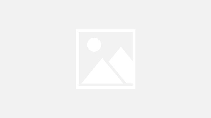 طيور الفلامنجو في محمية الوثبة للأراضي الرطبة